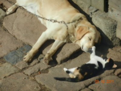 Exchange of caresses between dog and cat