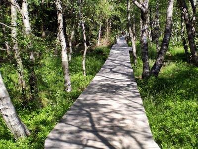Wanderweg durch das Rote Moor mit Infotafeln zu Natur und Geschichte