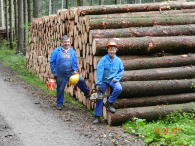 Felling forest stocks