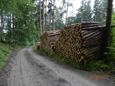 Wood sales to the State